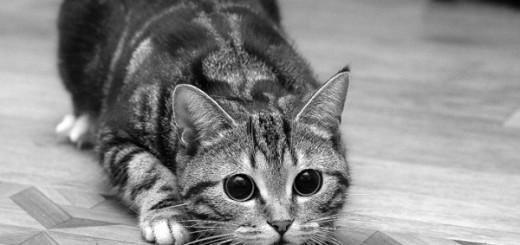 gatto_discolo