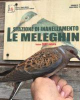 Un paradiso terrestre per piante e uccelli: le Meleghine a Finale Emilia - La natura della Bassa che non ti aspetti