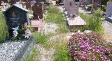 Cimitero di Finale Emilia, azzerati i fondi per le manutenzioni straordinarie