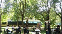 Giornata dell'albero, nel Modenese regalate 7mila piante per 2200 beneficiari, alloro e ligustro selvatico le specie più richieste