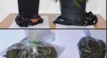 Traffico di droga in San Giovanni Bosco, 20enne arrestato dalla Polizia di Stato