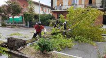 Allagamenti e alberi caduti creano problemi sulle strade a Camposanto, Medolla e Mirandola