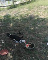 Al parchetto delle piscine acqua putrida e prolificano gli animali, bonifica lontana a San Felice