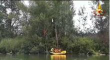 Airone resta impigliato con un'ala ai rami di un albero, salvato