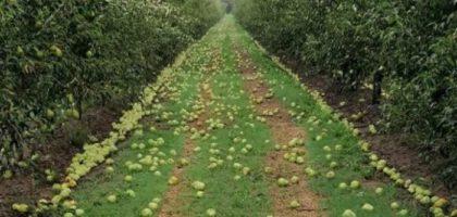 """Dopo i temporali la conta dei danni alle coltivazioni, Coldiretti """"Una vera strage"""""""