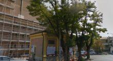 Addio alle robinie di piazza Marconi a Mirandola, alle spalle del Teatro Nuovo