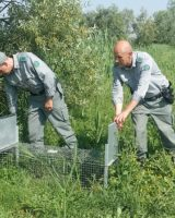 Obiettivo, eradicazione della specie: la Provincia approva la convenzione tra enti contro le nutrie