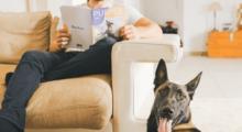 Assistenza veterinaria da remoto, una precauzione anti-Covid