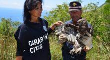 Presentato il Calendario CITES 2021, alla scoperta degli animali più rari