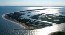 Aree protette, al largo del Delta del Po oltre 31 mila ettari di mare sottoposti a tutela, per la protezione di tartarughe e delfini