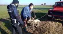 San Felice, cane salvato dal fango grazie a Vigili del Fuoco e Polizia Locale
