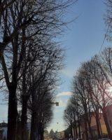 Novi di Modena, monitoraggio alberi in viale Vittorio Veneto
